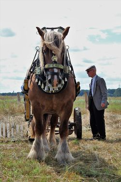 1900s Event Farmland See What I See South Limburg Walking Around Taking Pictures WorkingHorse Day Domestic Domestic Animals Farmland Countryside Farmlife Field Fieldwork Historic Historic Event Horse Horse Photography  Land Livestock Mammal Nature Nonke Buusjke Outdoors Working The Field