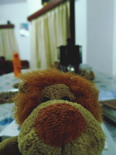 Softtoys Indoors  Stuffed Toy Teddy Bear Focus On Foreground Close-up Day No People Animal Themes Mammal
