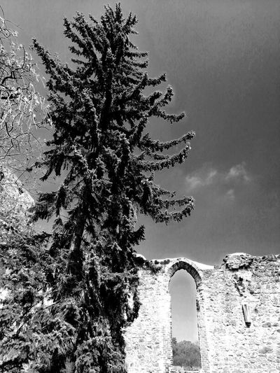 Unforgettable ♥ Unforgettable Moment Blackandwhite Black & White Ruins Architecture Ruins Architecture Ruine Tree Pixelated Sky Close-up