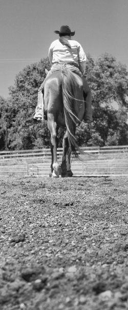 Ranch Life My Hobby Enjoying Life Love Horse Life Horseback Riding Random Acts Of Photography 2017 Eyeem Awards One Animal Animal Themes Outdoors Domestic Animals Horse Fun Summer Mammal Close-up The Ranch