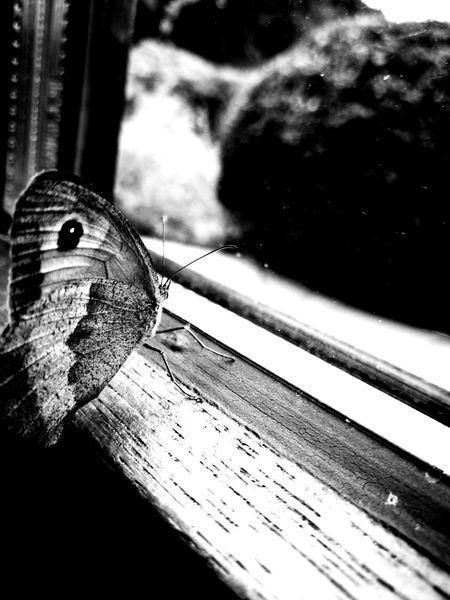 Butterfly Monochrome Monoart Nature Blackand Check This Out Artphotography Nature Photography Nature Butterflies Hello World Garden Photomypassion Passionphotography Photographylovers Naturelovers View BadZwischenahn Ammerland Germany