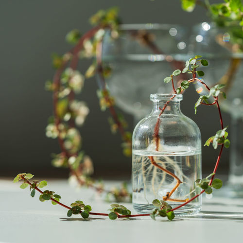 Close-up of glass bottle on table