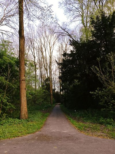 Nice walk in the park. Tree The Way Forward Sky Nature Outdoors Day Road No People Growth Tranquility Scenics Green Color Beauty In Nature Water Outdoors Photography Made By Noesie HuaweiP9Photography The Week On EyeEm