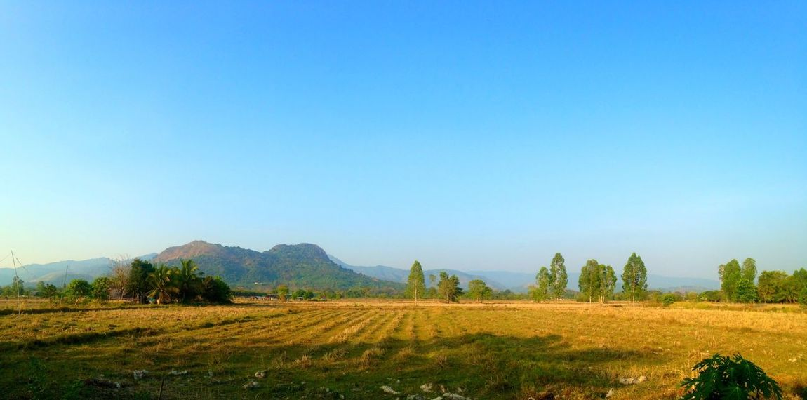 Sky Field Landscape Scenery Nature Sky Tree Rual Blue Green Morning Frash