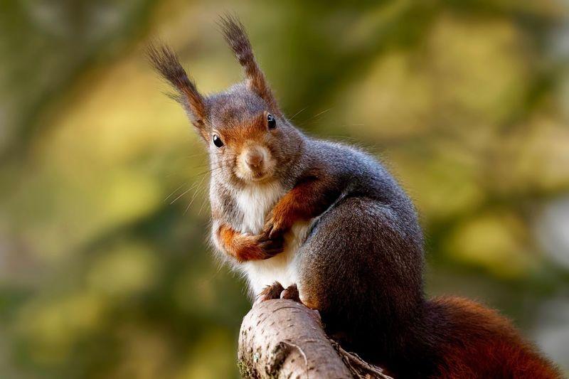 Animal Themes Animal Wildlife Animal Animals In The Wild One Animal Focus On Foreground Mammal Nature Squirrel EyeEmNewHere