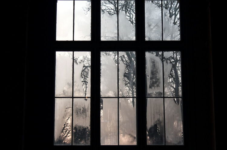 Blind Window Blind Windows Condensation Dark Evening Light Tree Window Window Frame Winter Light Still Life Twilight