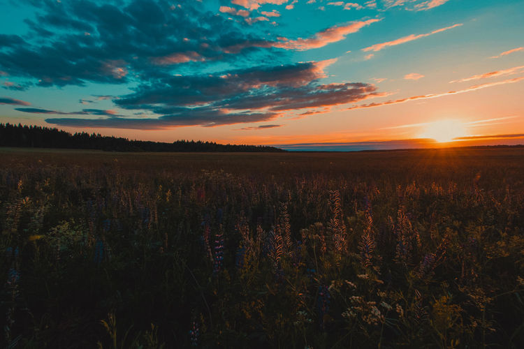 Sky Beauty In Nature Tranquility Tranquil Scene Sunset Growth Field Land Plant Cloud - Sky Scenics - Nature Environment Landscape Nature Orange Color No People Rural Scene Agriculture Crop  Idyllic Outdoors Plantation