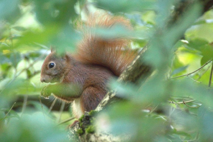 Squirrel Animal Hiding In The Wood Hidden Squirrel Hidden Animal Wood Tree Animal On Tree Animals In The Wild One Animal No People Animal Themes Close-up Green Color Nature Animal Wildlife