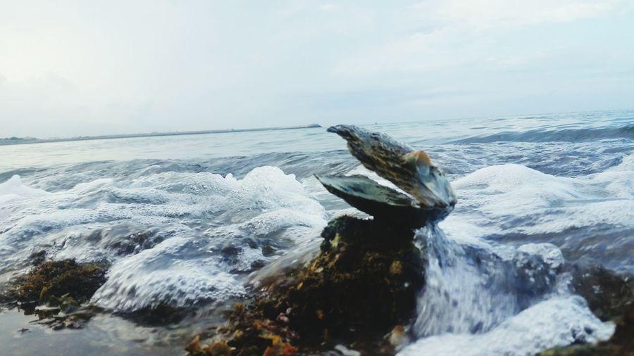Oyster shell on beach against sky
