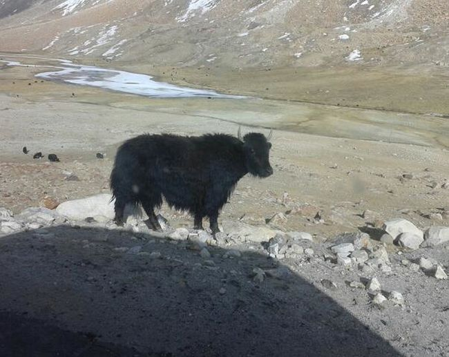....on A Way Of Leh, India.