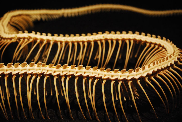 Close-up view of skeleton