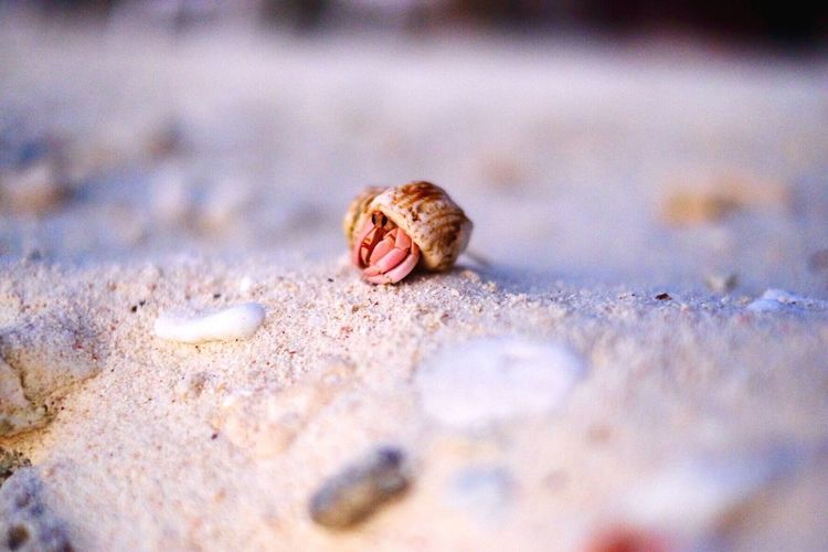 Surface level of hermit crab at beach