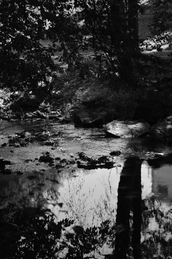 Dark Quiet Moments Abstract Beauty In Nature Blackandwhite Day Forest Lake Monochrome Nature No People Outdoors Reflection Tranquility Tree Vertical Water
