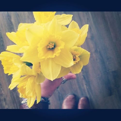 Who can resist a bundle of joy for $1.29? I sure cant. Thanks TJ ? ❤ ?? Mademyday Daffodils Bundleofjoy Traderjoes dabest