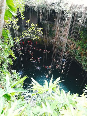 Cancun Mexico Travel Destinations Enjoying Life Vacations Natural Pool Cenote Ik Kil Freshness