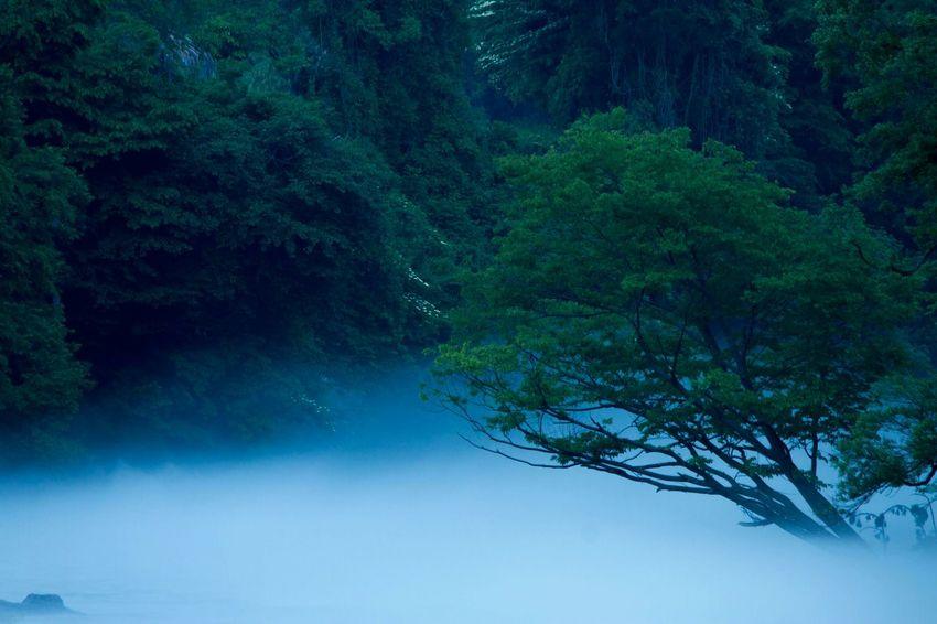 Taking Photos EyeEm Nature Lover EyeEm Best Edits EyeEm Best Shots This Week On Eyeem 雲海