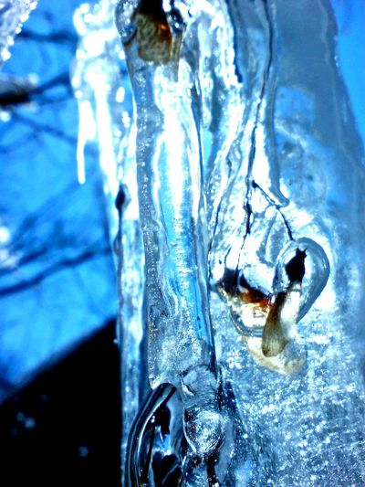 Seed Ice Case ,at My Hometown Yamanashi , 7 Years Ago Photo ,