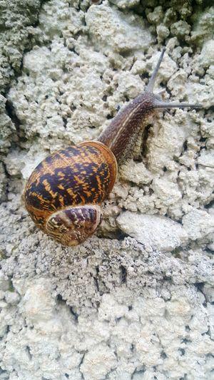 snail EyeEm