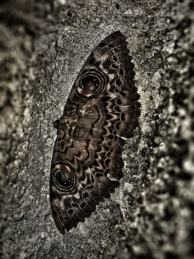 Animal Themes Animals In The Wild Animal Wildlife Close-up No People Nature Insect Still Life