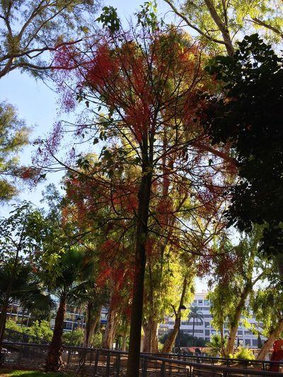 Flowers,Plants & Garden My City Nature Arbre