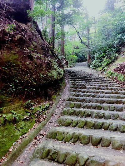 Plant Tree Growth Nature Day No People Green Color Land Beauty In Nature Forest Outdoors Direction The Way Forward Footpath Stone Sunlight
