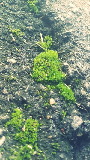 Outdoors No People Nature Plant High Angle View Day Growth Green Color Close-up Leaf Freshness Beauty In Nature