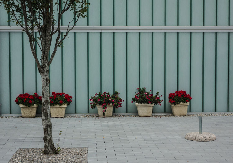 Potted flowers on the street
