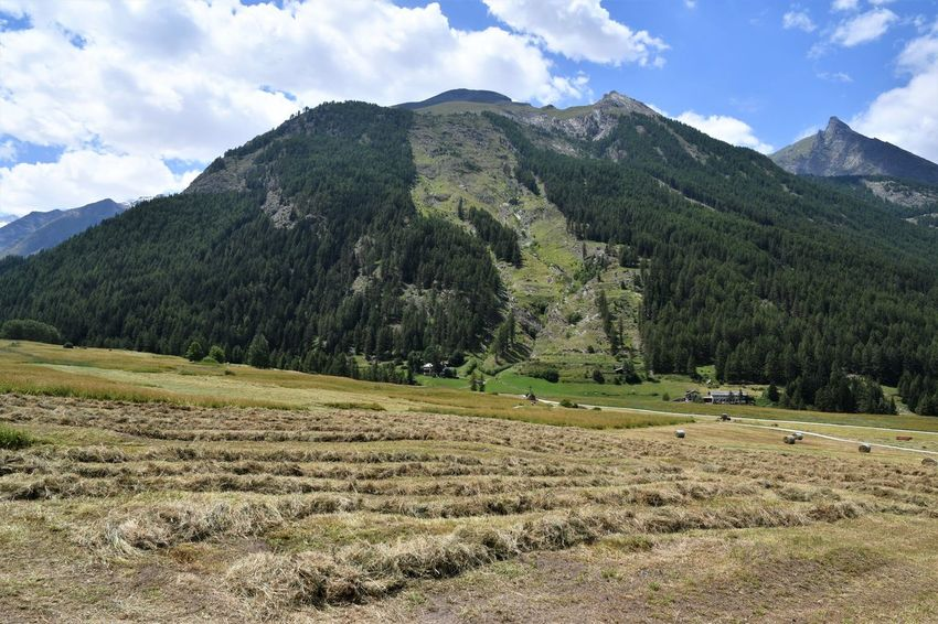 Hay harvest in Italian Alps Agriculture Hay Field Hay Harvest Beauty In Nature Cloud - Sky Day Environment Field Grass Green Color Hay Bales Land Landscape Mountain Mountain Peak Mountain Range Nature No People Non-urban Scene Outdoors Plant Scenics - Nature Sky Tranquil Scene Tranquility