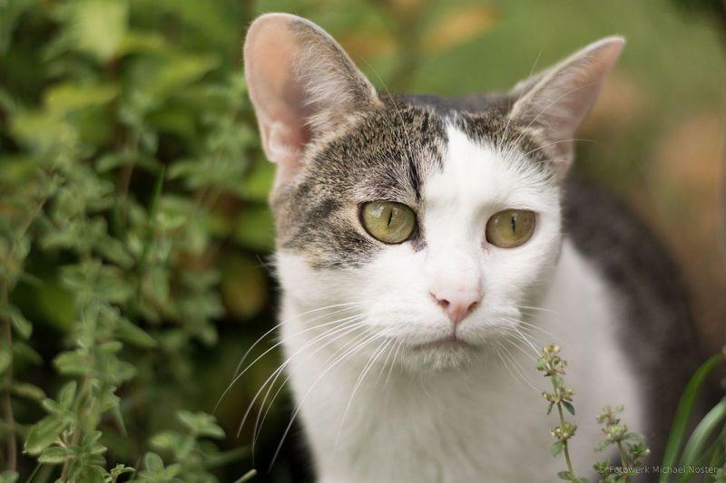Domestic Cat Pets Domestic Animals One Animal Portrait Feline Animal Animal Themes Cat