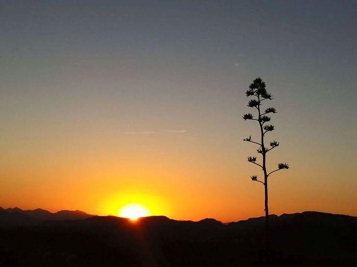Azsunsets Az Desert Wildflowers Tortilla Flat Sonoran Desert Sunset Beautiful Sunset Beautiful Sky