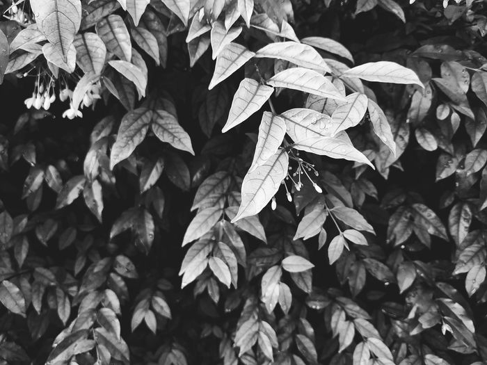 white plant Blackandwhite Infrared Photography White Leaf monochrome photography Monotone Leaves Leaf Close-up Plant Blooming Leaf Vein Fragility Snow Covered In Bloom Dahlia Plant Life Pollen