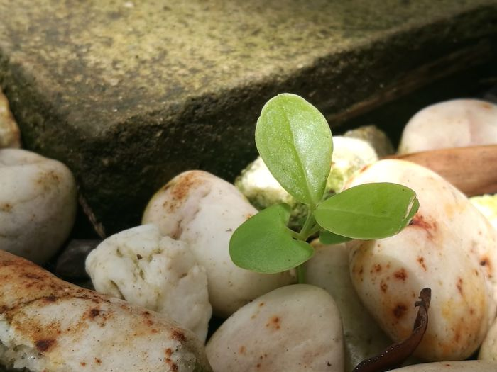 Small tree on rock Gardent Waterfall Rock Leaf Summer Beach Close-up Plant Green Color