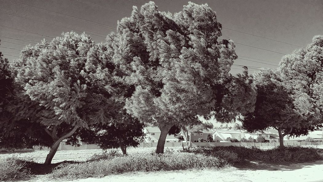 Black And White Photography Vintage Photo Close-up Windyday No People Outdoors Nature Santaanariverbed Prayertime Walking Trail Godrules Perspectivephotography DecemberPhotoProject December 2017