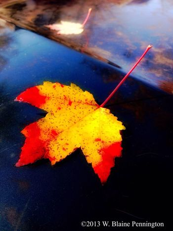 Most leaves down Maple Autumn Leaves Car
