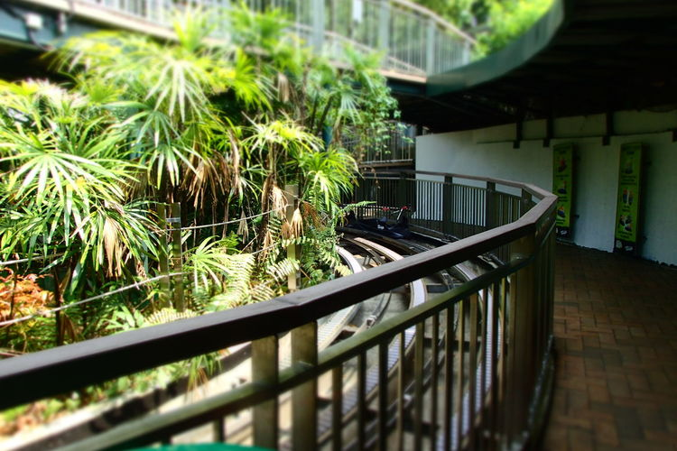 April Showcase EyeEm 2016 Green Green Green!  Lugesentosasingapore Selective Focus The Tourist The Travel Intern