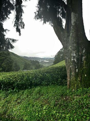 رأيكم يهمني تصويري  نوت3 Note3 Hello World مزارع الشاي ماليزيا لكل من مر من هنا رأيك يهمني