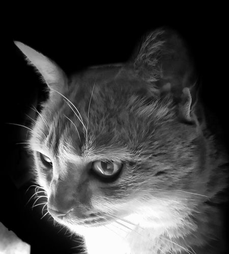 AntiM Cat Watching TV Cat Watching Cats Of EyeEm Eddie Tor My Cat Is Cooler Than Your Kids! Pet Portraits Animal Themes Blackandwhite Cat Close-up Portrait Cat Portrait Cat Staring Close-up Day Domestic Animals Domestic Cat Feline Indoors  Mammal No People One Animal Pets Whisker