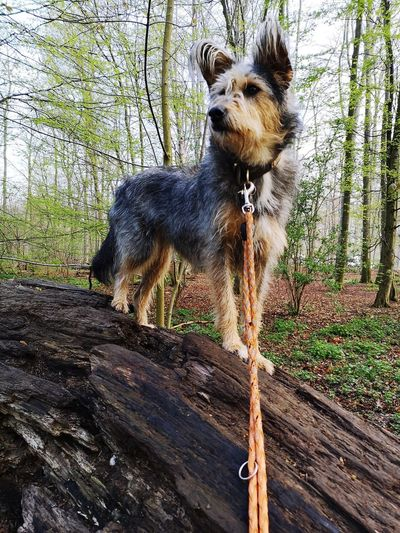 Lucky checking out the woods EyeEm Pets Lover Check This Out Picard Mixe Pets Tree Dog Close-up