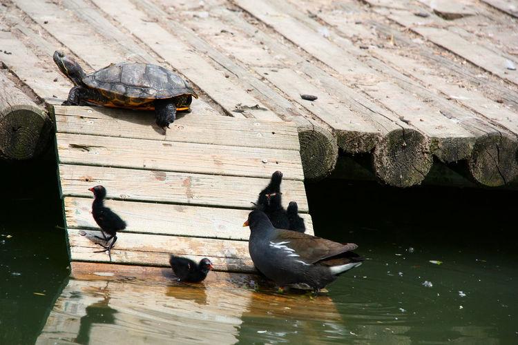 High angle view of ducks swimming on lake