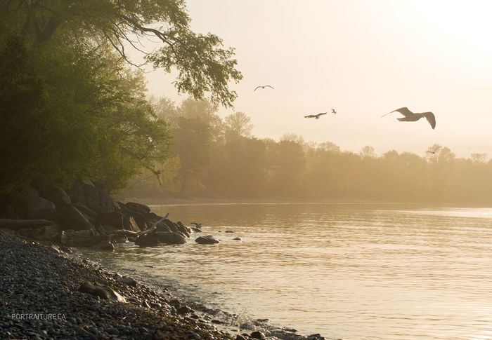 Flying Bird Nature Water Beauty In Nature No People Sunset Flock Of Birds Tree Scenics Sky Sea Outdoors Canada Canada 150 Lakeview Lakeshore Lakeside Lakeontario  Sunrise Sunrise_sunsets_aroundworld Sunrise_Collection Mist Fog Haze