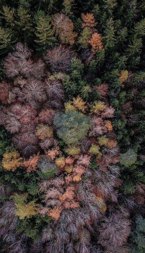 Full frame shot of tree in forest