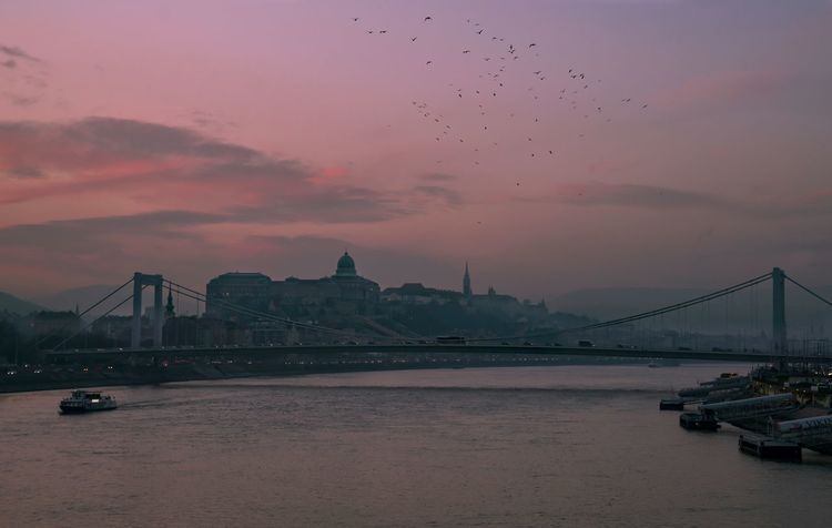 The Birds Birds Hungary Magyarország Dusk Mik Budapest Architecture Built Structure City Sky Travel Destinations Connection Building Exterior Bridge Bridge - Man Made Structure Water Sunset Nature Tourism Travel Cloud - Sky Cityscape Outdoors