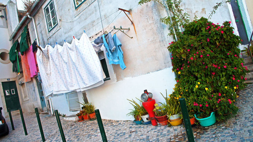 Flowers In My Garden Flowers Of EyeEm Laundry Street Life Architecture Building Exterior Clothes Clothesline Clothing Day Drying Drying Clothes Hanging Lisboa Lisbon Local House Locals And Tourist No People Outdoors Street Photography