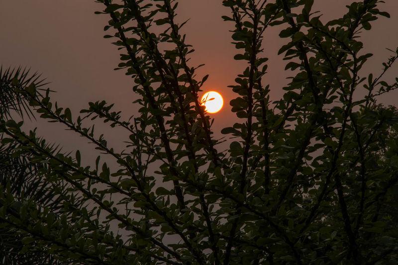 Sunlight Sunset_collection Nature Outdoors Sky Sumertime👑☀ Sunset Tree