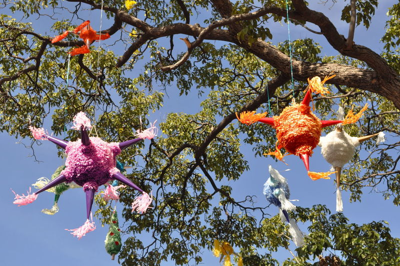Piñatas hanging from tree Beauty In Nature Branch Close-up Day Flower Flower Head Fragility Freshness Fruit Growth Hanging Low Angle View Nature No People Outdoors Piñatas Sky Tree