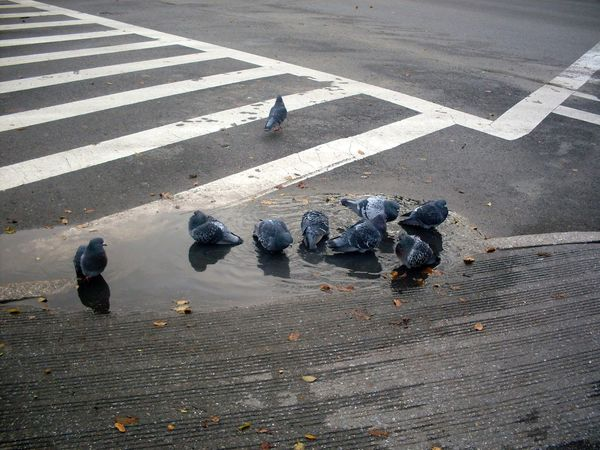 City Life Day Nature Outdoors Pigeons Public Bath Public Bathroom Streetphotography Urban Nature