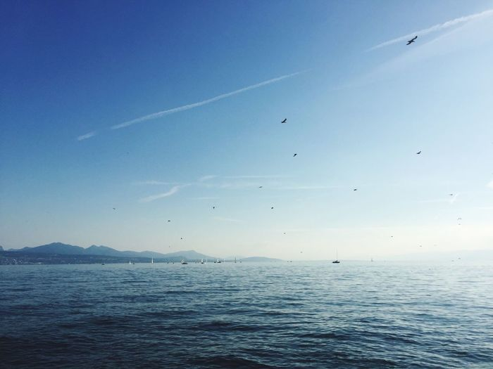 Switzerland EyeEmNewHere EyeEm Best Shots Switzerland Lausanne Lac Léman Sky Sea Flying Water Vertebrate Bird Animal Themes Beauty In Nature Blue Tranquil Scene Scenics - Nature Nature Group Of Animals Tranquility Waterfront No People Horizon Over Water The Great Outdoors - 2018 EyeEm Awards