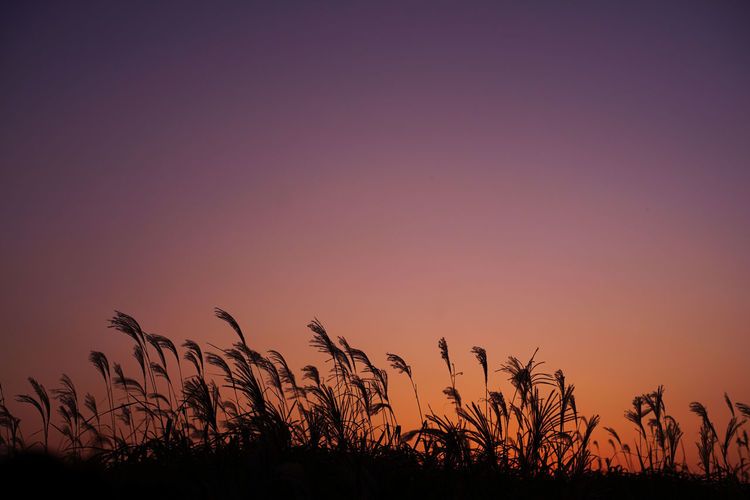 Silhouette plants on field against romantic sky at sunset
