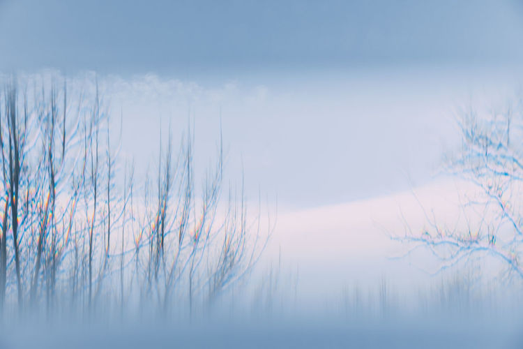 Trees In A Row Winter Snow Prism Prism Effect Prism Colors Branches Blue Minimalism Minimal No People Nature Day Winter Outdoors Bare Tree Sky
