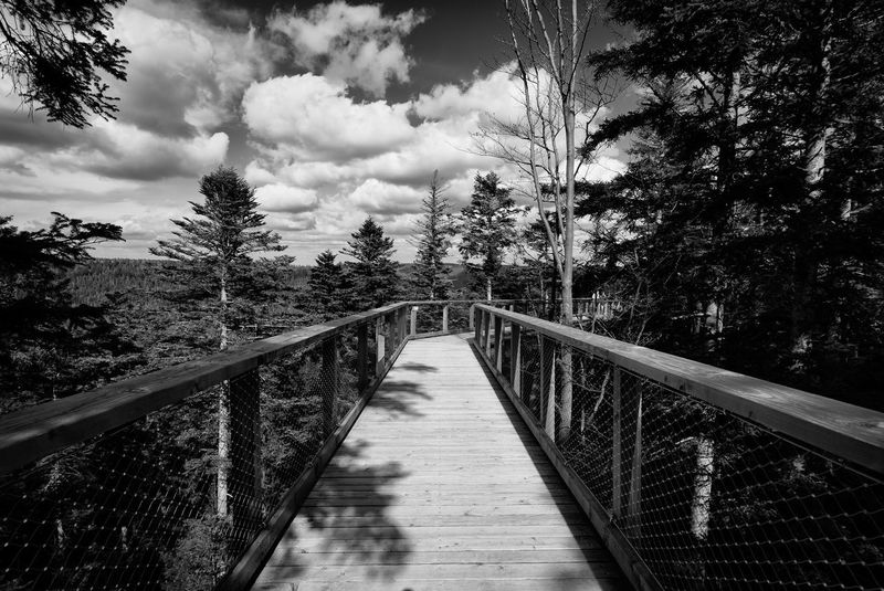 """A view from the roof of the Black forest"" Black & White Catwalk Cloudy Day Forrest Photography GERMANY🇩🇪DEUTSCHERLAND@ Roof Trees Wood Blackandwhite Blackandwhite Photography Blackforest Blackforest Germany Bridge Bridge View Forrest Forrest Nature Germany Rooftop View"